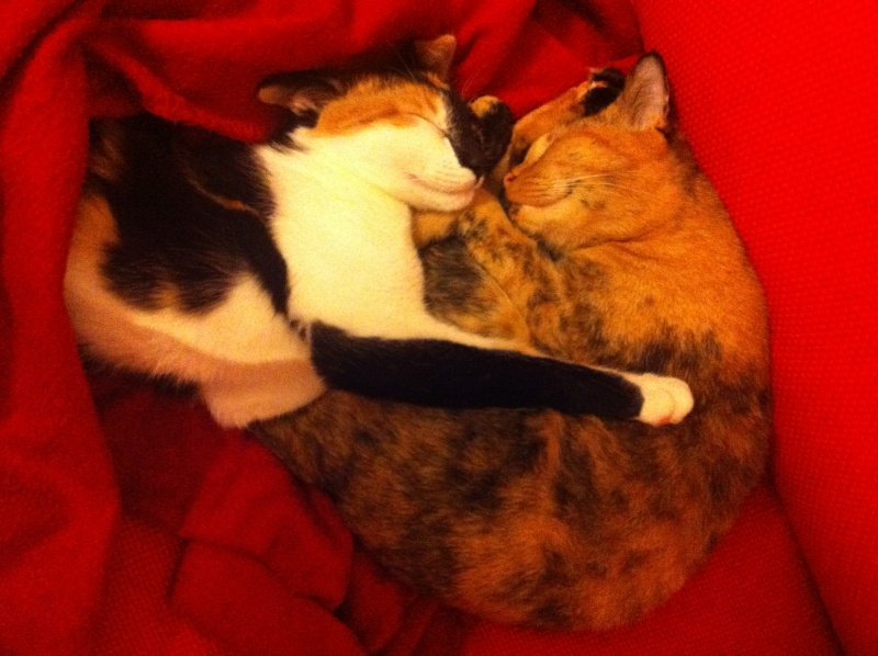 FICELLE et YUMI (Nosy Be) - Page 8 Img_1612
