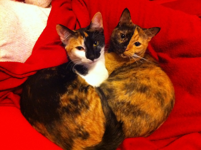 FICELLE et YUMI (Nosy Be) - Page 8 Img_1714