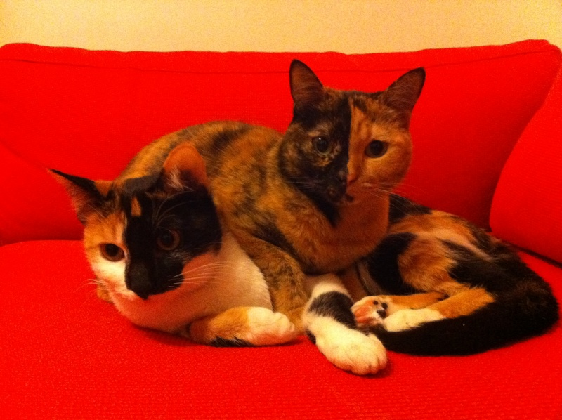 FICELLE et YUMI (Nosy Be) - Page 8 Img_1715