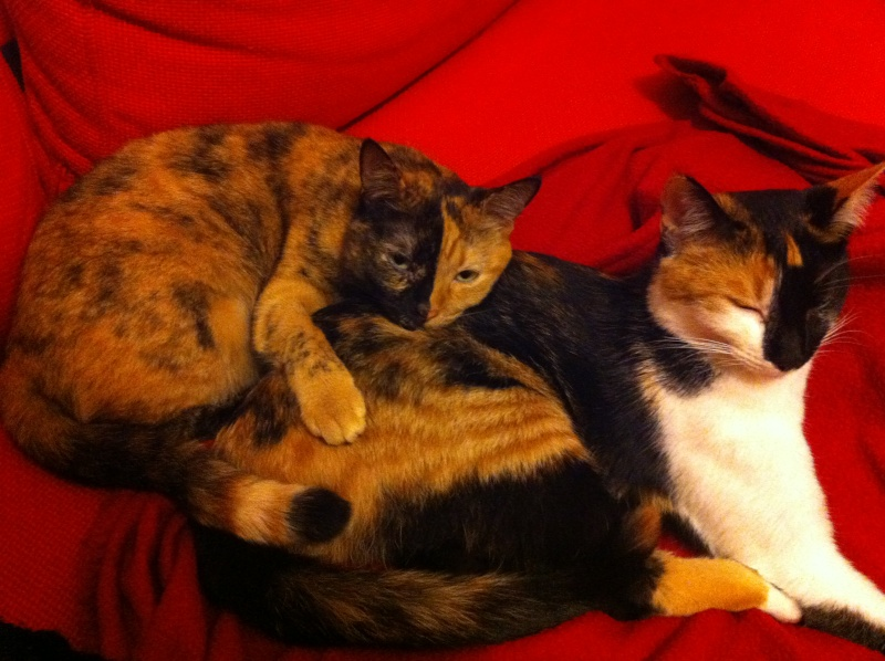 FICELLE et YUMI (Nosy Be) - Page 8 Img_1810