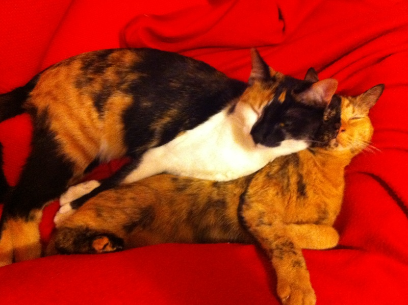 FICELLE et YUMI (Nosy Be) - Page 8 Img_1811