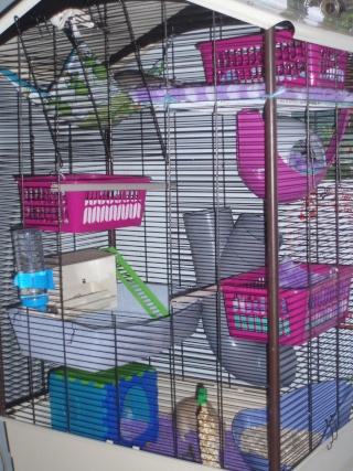 Nouvelle cage besoin d'aide Pa070019