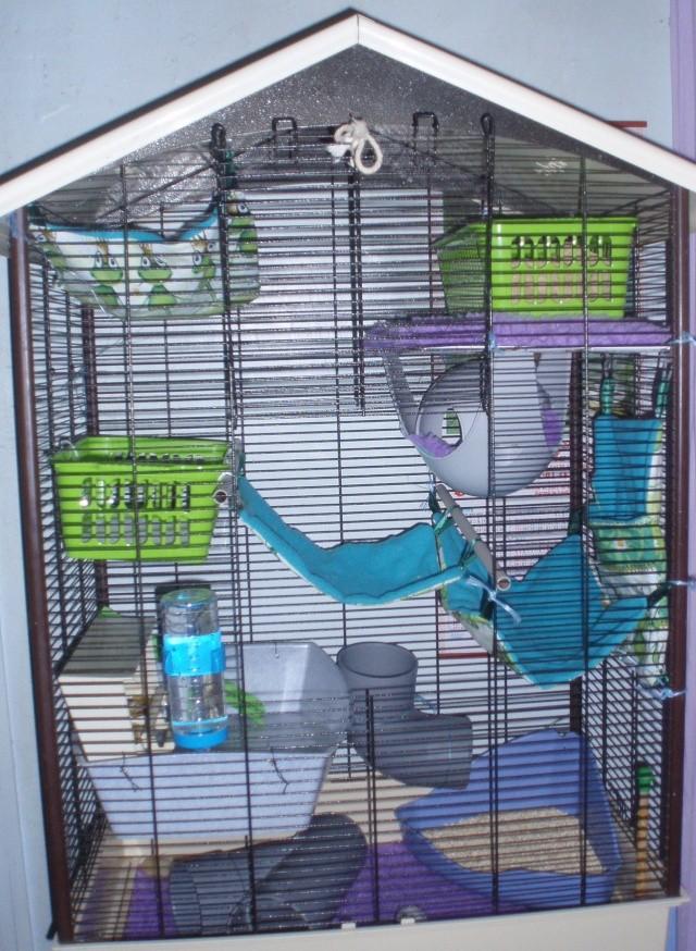 La cage de Los Pom d'Api , de Los Aaron , Pex Oompa Loompa et de - Page 3 Pb090017