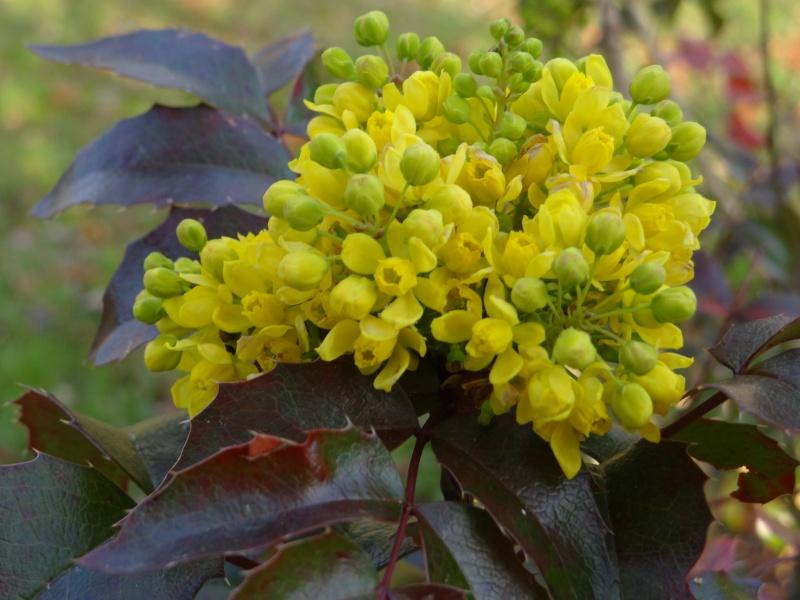 Floraisons printanières 2014 Dsc04919