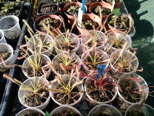 [Vermisso]-Mes plantes - Page 30 P1840010