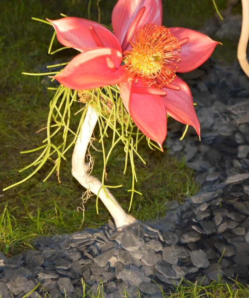 photos des floralie de NANTES Dsc_0014