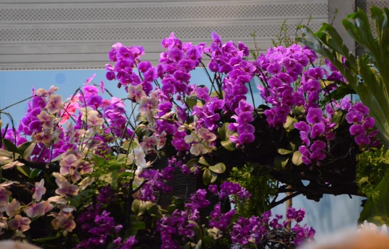 photos des floralie de NANTES Dsc_0015