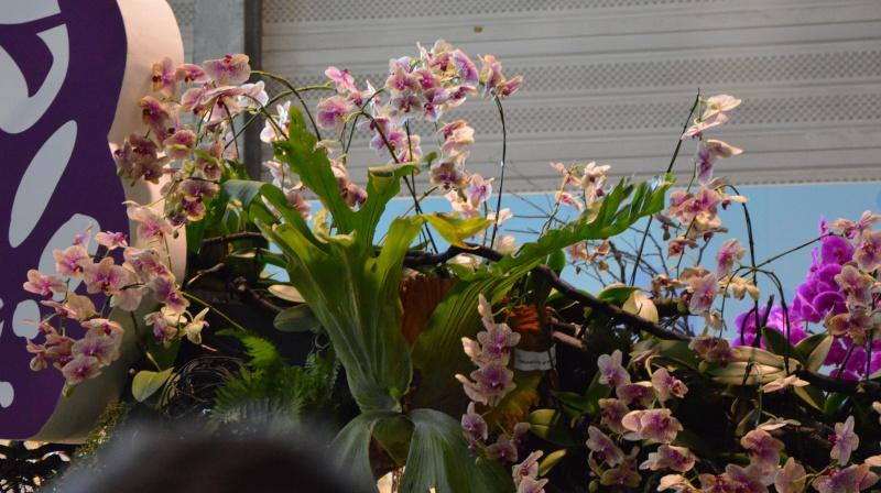 photos des floralie de NANTES Dsc_0017