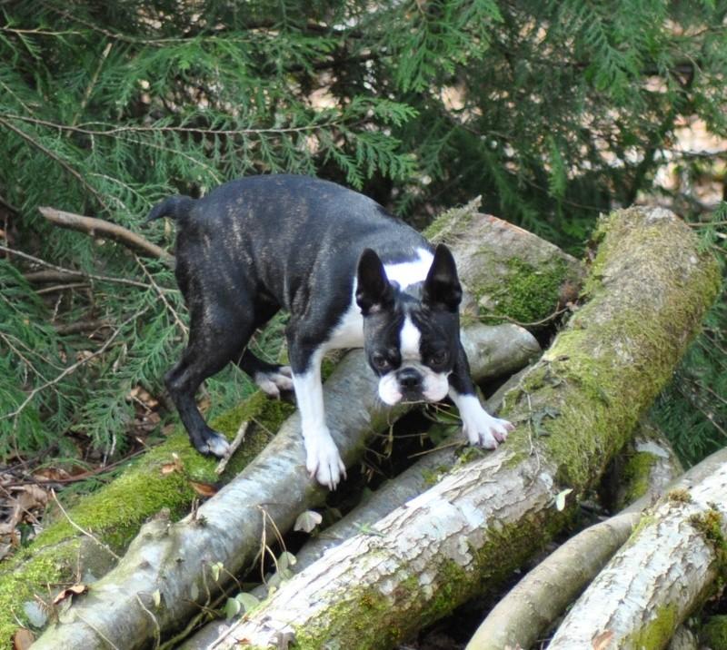 Balade en forêt ... pour les Risèd 30082076