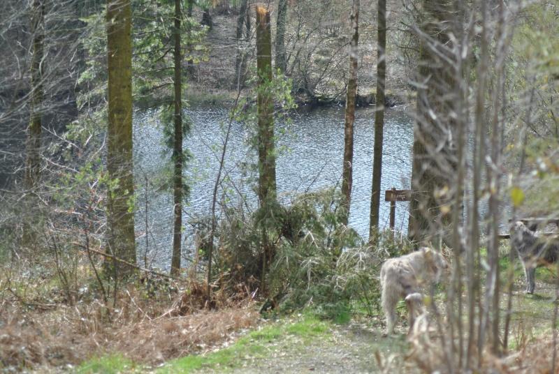 Balade en forêt ... pour les Risèd 30082079