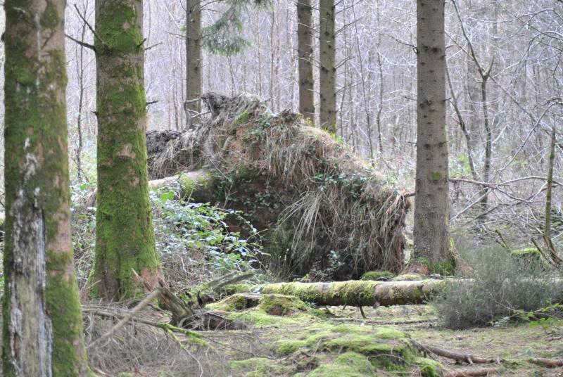 Balade en forêt ... pour les Risèd 30082082