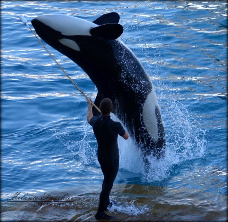 [photo] Comparaisons  impressionnantes orques / humains - Page 14 Dsc_0013