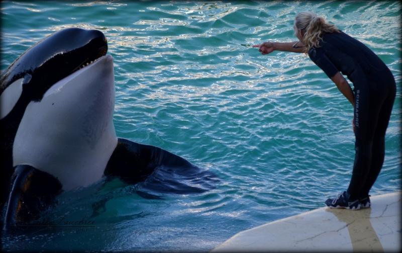 [photo] Comparaisons  impressionnantes orques / humains - Page 14 Dsc_0110