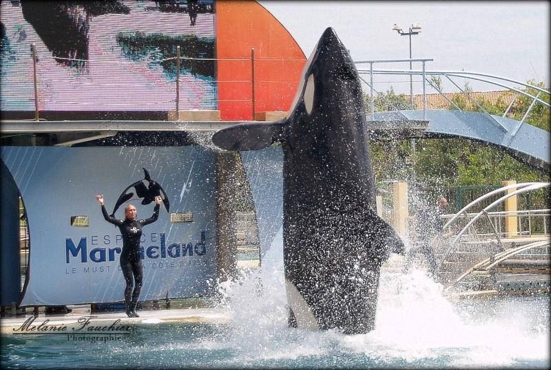 [photo] Comparaisons  impressionnantes orques / humains - Page 14 P1012614