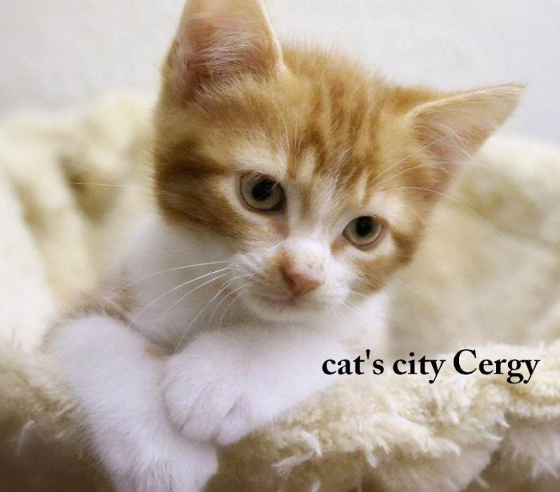 GEORGES et LUNA 2 ans - FIV+ (Catscity Cergy 95) ! George12