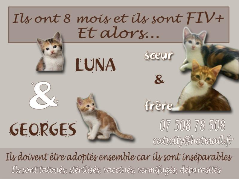 GEORGES et LUNA 2 ans - FIV+ (Catscity Cergy 95) ! George13