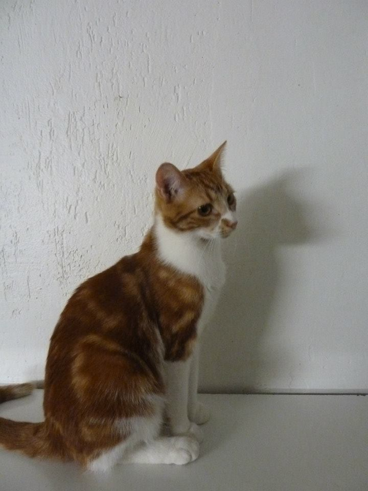 GEORGES et LUNA 2 ans - FIV+ (Catscity Cergy 95) ! George15
