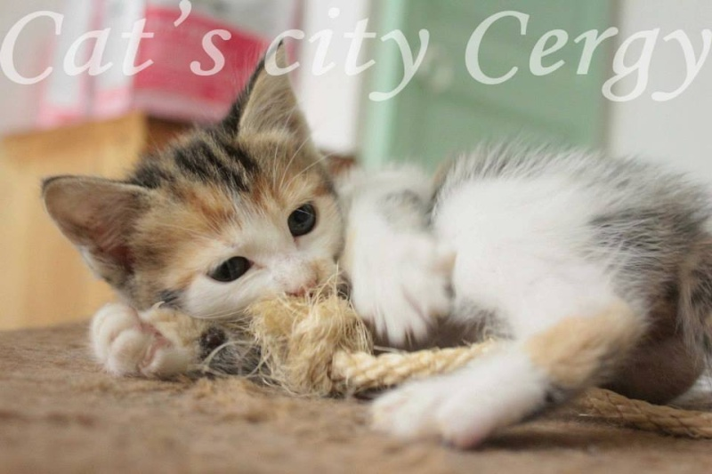 GEORGES et LUNA 2 ans - FIV+ (Catscity Cergy 95) ! Luna12