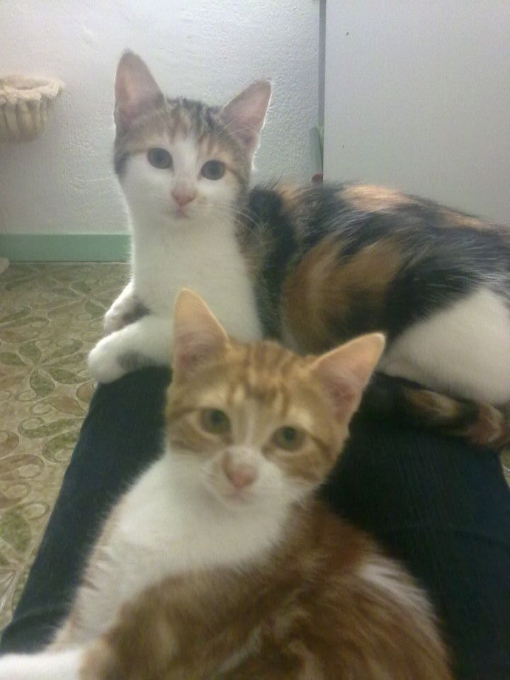 GEORGES et LUNA 2 ans - FIV+ (Catscity Cergy 95) ! Luna_e10