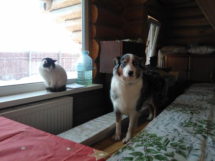 аусси и кошка - Страница 4 Wp_00010