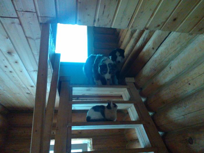 аусси и кошка - Страница 4 Wp_00011