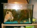 aquarium 180l, 39l crevette, 20l repro, 17l crevette, 12l combattabt, et 30l red cherry (diablotin) 12l10