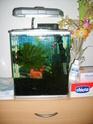 aquarium 180l, 39l crevette, 20l repro, 17l crevette, 12l combattabt, et 30l red cherry (diablotin) 17l_310