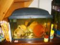 aquarium 180l, 39l crevette, 20l repro, 17l crevette, 12l combattabt, et 30l red cherry (diablotin) 20l_110