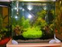 aquarium 180l, 39l crevette, 20l repro, 17l crevette, 12l combattabt, et 30l red cherry (diablotin) 30l_re10