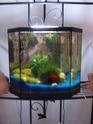 aquarium 180l, 39l crevette, 20l repro, 17l crevette, 12l combattabt, et 30l red cherry (diablotin) 39l_610