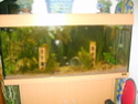 aquarium 180l, 39l crevette, 20l repro, 17l crevette, 12l combattabt, et 30l red cherry (diablotin) S5000810