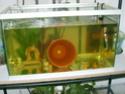 aquarium 180l, 39l crevette, 20l repro, 17l crevette, 12l combattabt, et 30l red cherry (diablotin) S5000811