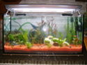aquarium 180l, 39l crevette, 20l repro, 17l crevette, 12l combattabt, et 30l red cherry (diablotin) S5000911