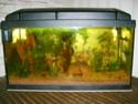 aquarium 180l, 39l crevette, 20l repro, 17l crevette, 12l combattabt, et 30l red cherry (diablotin) S5000912
