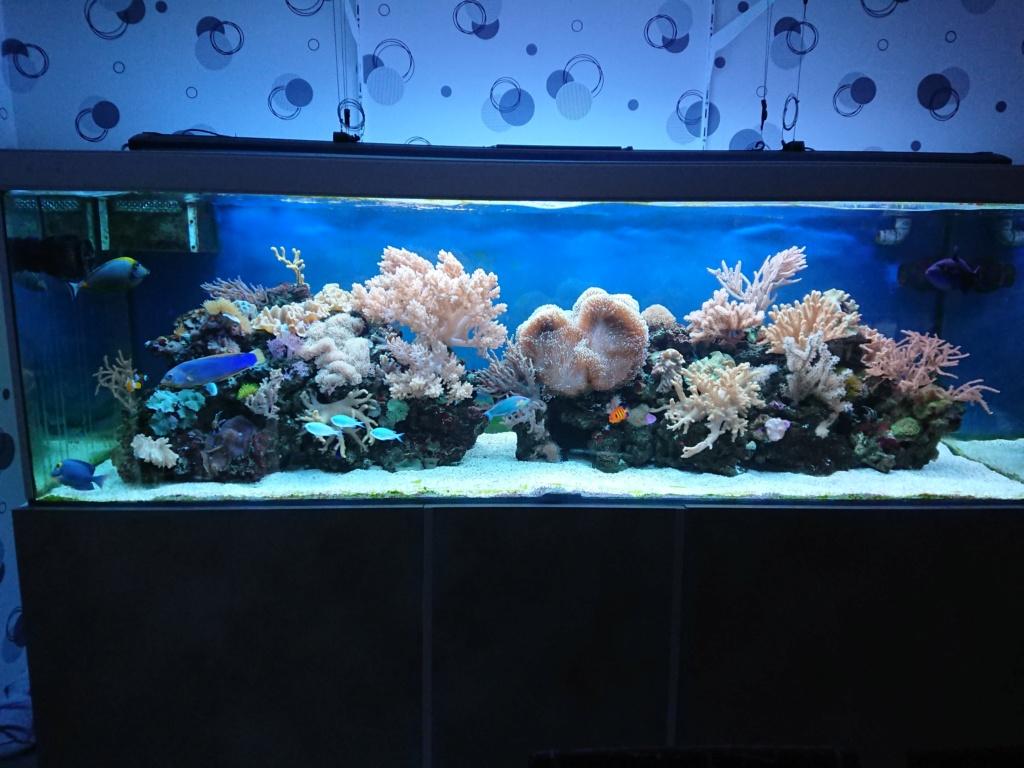 Retour au fish only 😊  Dsc_3010