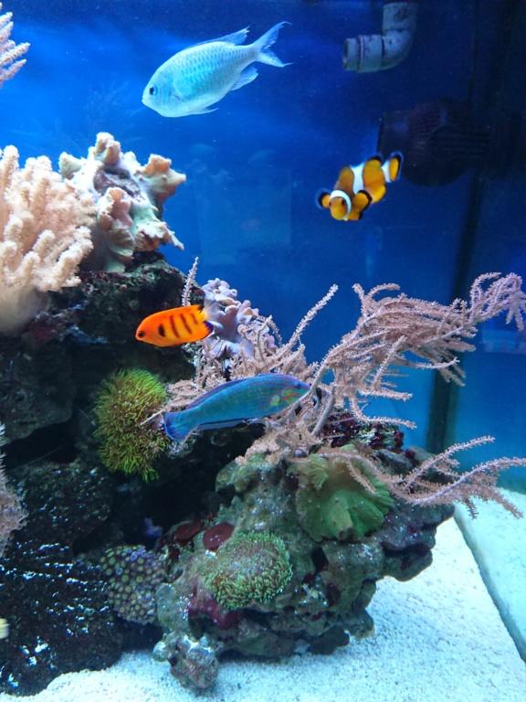 Retour au fish only 😊  Dsc_3011