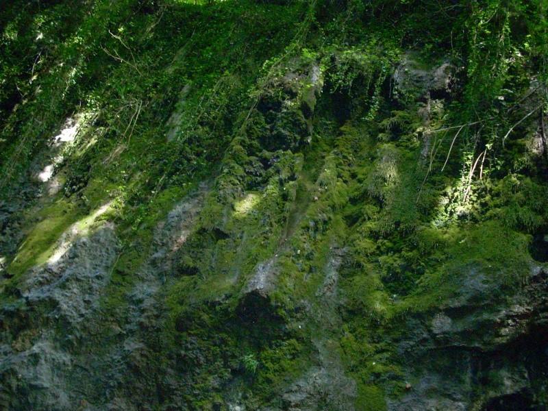 Votre photo pour Septembre 2008 Dscn0721