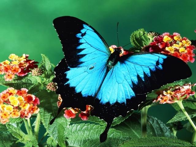 Mai 2014 -  Défi ADS #32 - Les papillons par Vérocoli se termine le 10 juin 2014 Butter10