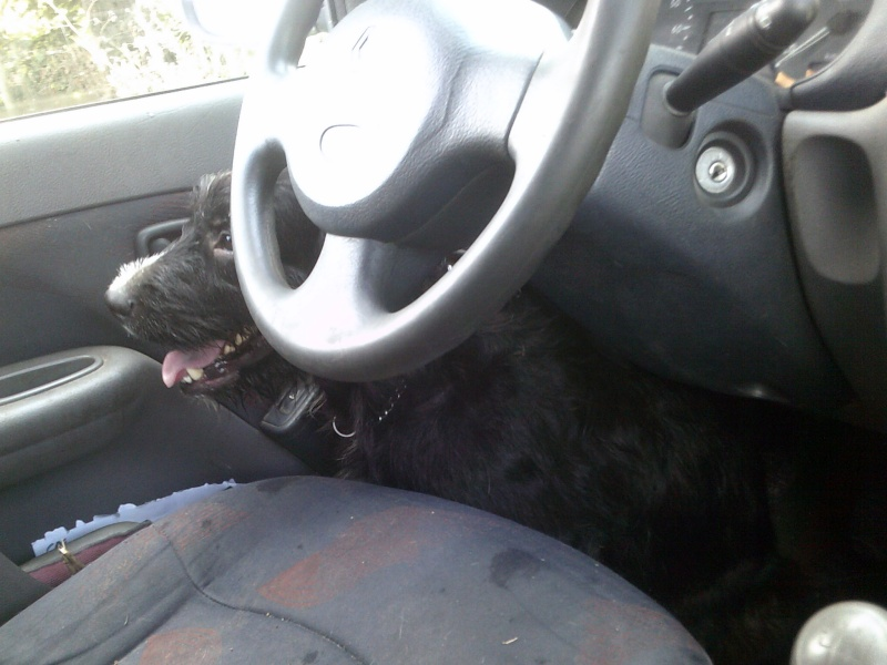 Transport en voiture : grille, filet, ceinture... Dscf0010