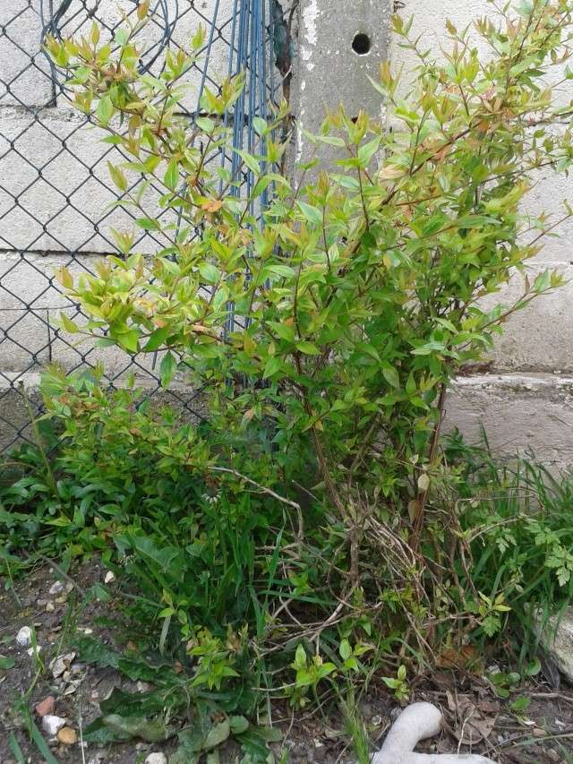 Qui ya t'il dans mon jardin de bon pour mes todons? Help besoin d'aide pour reconnaitre les plantes Arbust11