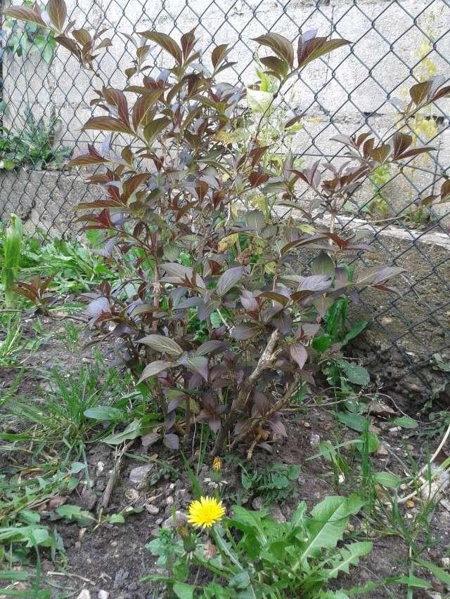 Qui ya t'il dans mon jardin de bon pour mes todons? Help besoin d'aide pour reconnaitre les plantes Arbust12