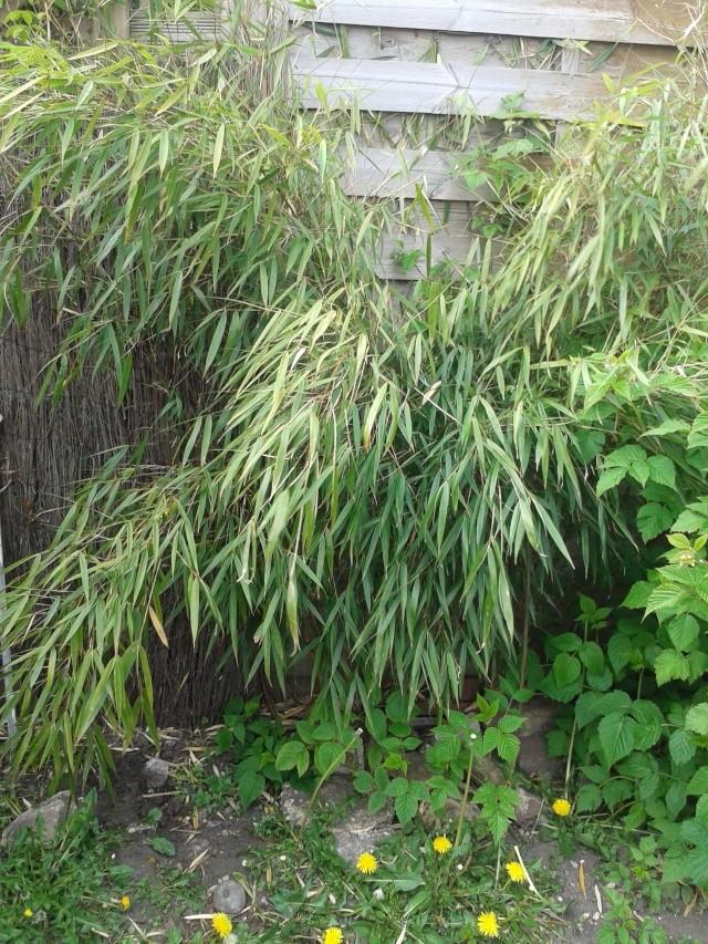 Qui ya t'il dans mon jardin de bon pour mes todons? Help besoin d'aide pour reconnaitre les plantes Buisso11