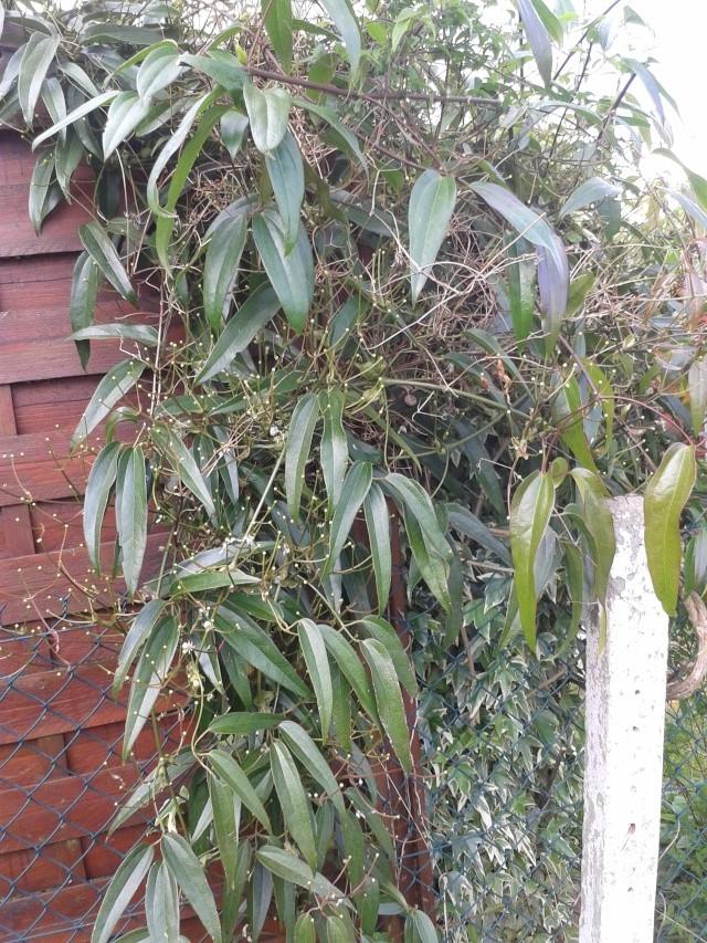 Qui ya t'il dans mon jardin de bon pour mes todons? Help besoin d'aide pour reconnaitre les plantes Buisso12