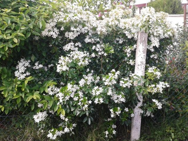 Qui ya t'il dans mon jardin de bon pour mes todons? Help besoin d'aide pour reconnaitre les plantes Buisso13