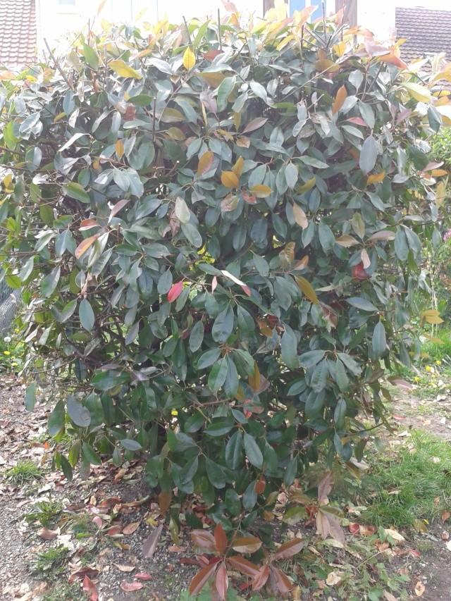 Qui ya t'il dans mon jardin de bon pour mes todons? Help besoin d'aide pour reconnaitre les plantes Buisso14