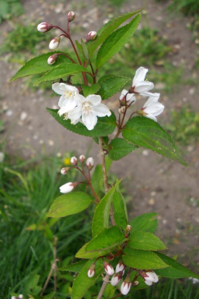 Qui ya t'il dans mon jardin de bon pour mes todons? Help besoin d'aide pour reconnaitre les plantes Imgp6213