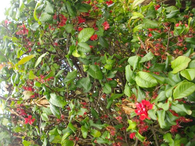 Qui ya t'il dans mon jardin de bon pour mes todons? Help besoin d'aide pour reconnaitre les plantes Imgp6220