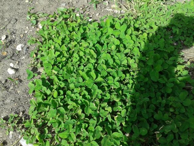 Qui ya t'il dans mon jardin de bon pour mes todons? Help besoin d'aide pour reconnaitre les plantes Plante11
