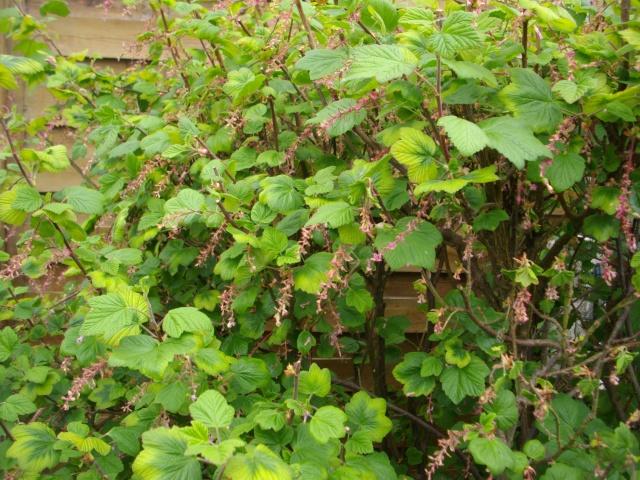 Qui ya t'il dans mon jardin de bon pour mes todons? Help besoin d'aide pour reconnaitre les plantes Plante24