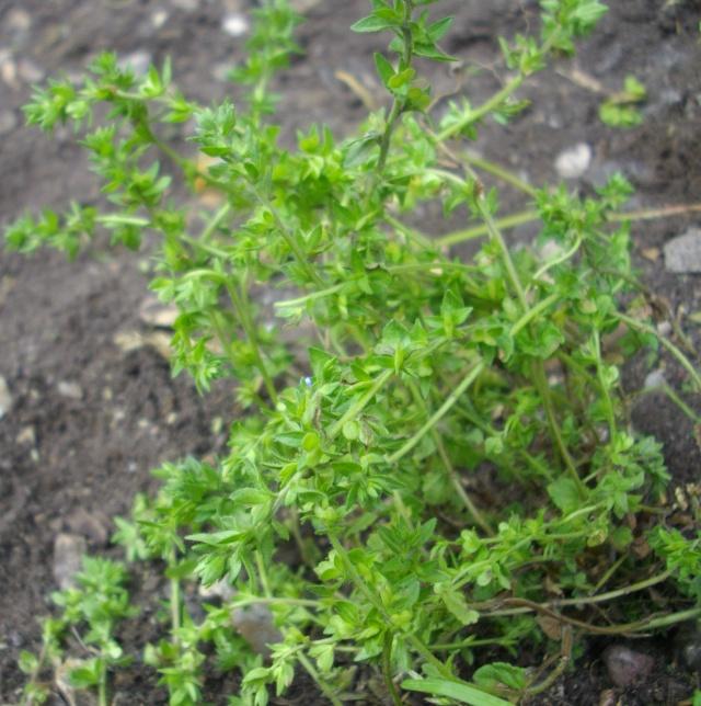 Qui ya t'il dans mon jardin de bon pour mes todons? Help besoin d'aide pour reconnaitre les plantes Plante26